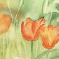 Tulpen_1